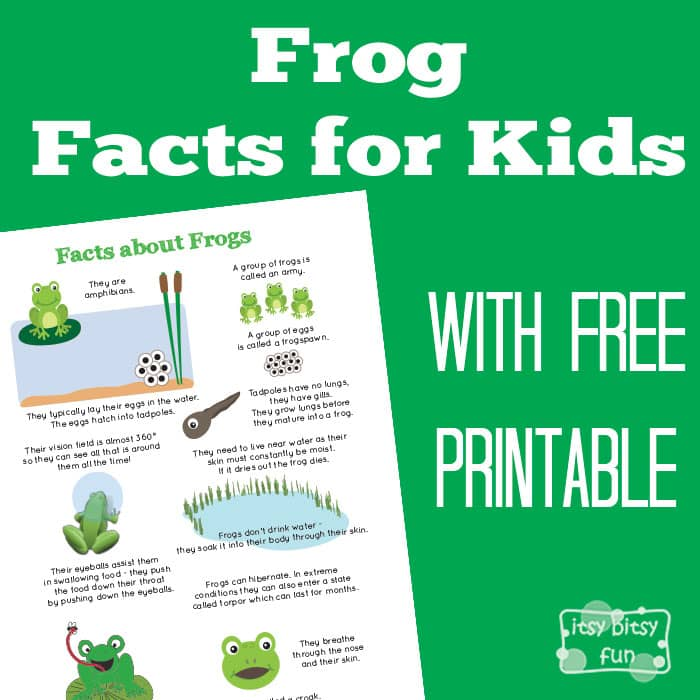 Fun Frog Facts for Kids - Itsy Bitsy Fun