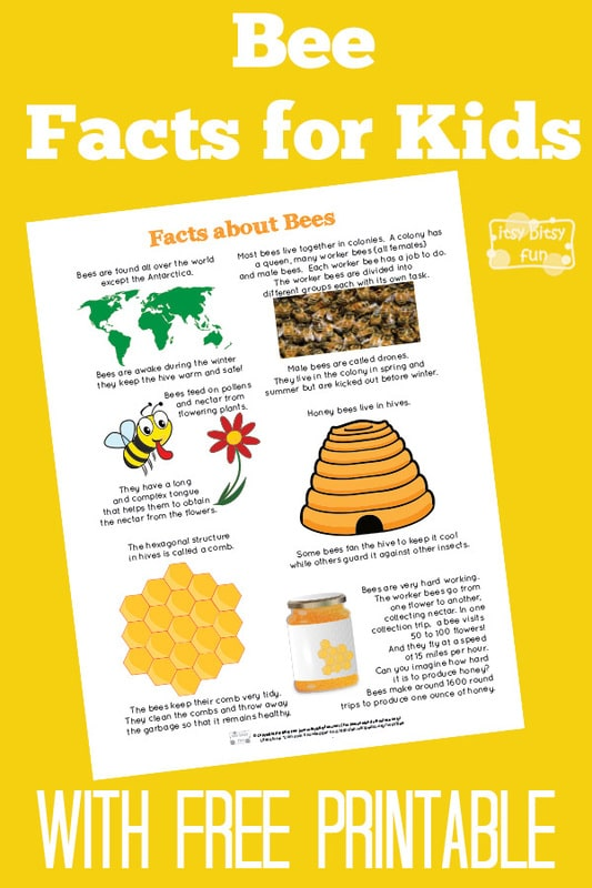 Fun Bee Facts for Kids
