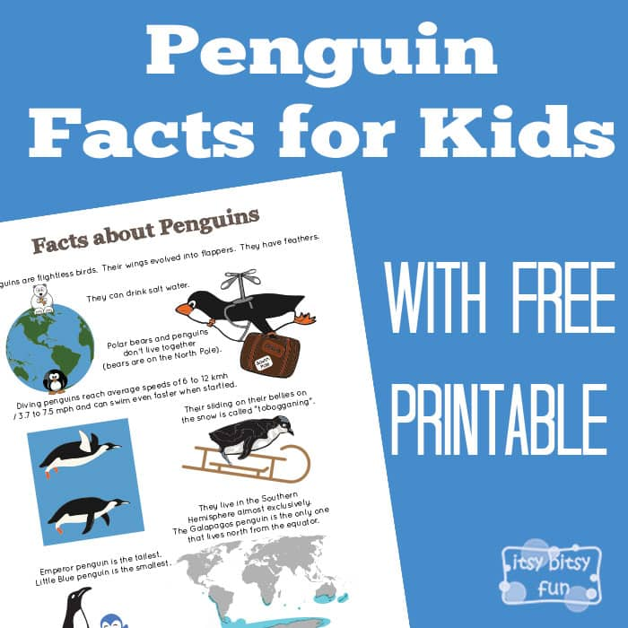 Penguin Facts for Kids - Itsy Bitsy Fun
