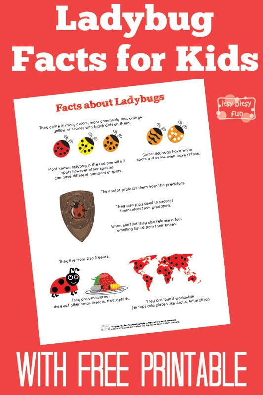 Fun Ladybug Facts for Kids