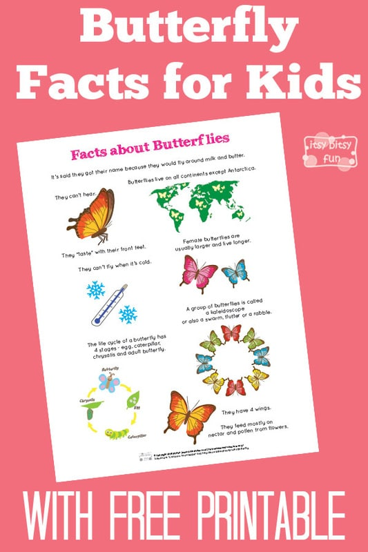 Fun Butterfly Facts for Kids - Itsy Bitsy Fun