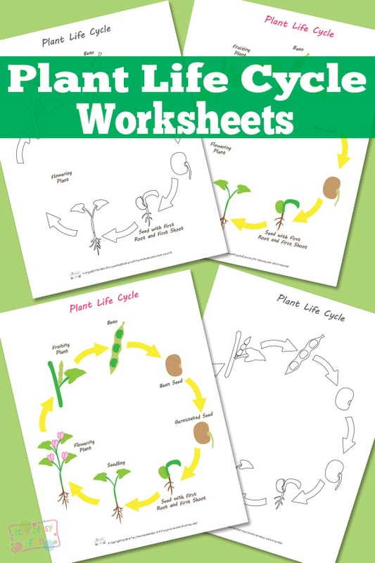 Life cycle of a plant for kids worksheet