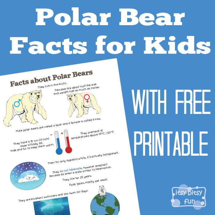 Fun Polar Bear Facts for Kids