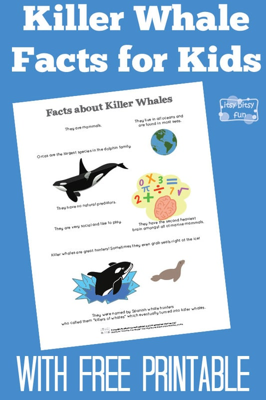 Free Printable Fun Killer Whale Facts for Kids