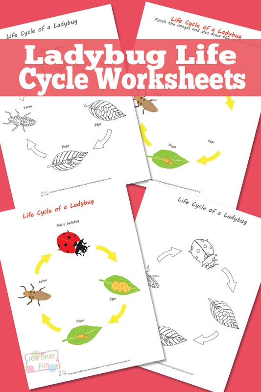 Free Pritnable Ladybug Life Cycle Worksheets and Diagrams
