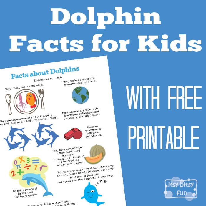 Did You Know Facts About Dolphins For Kids