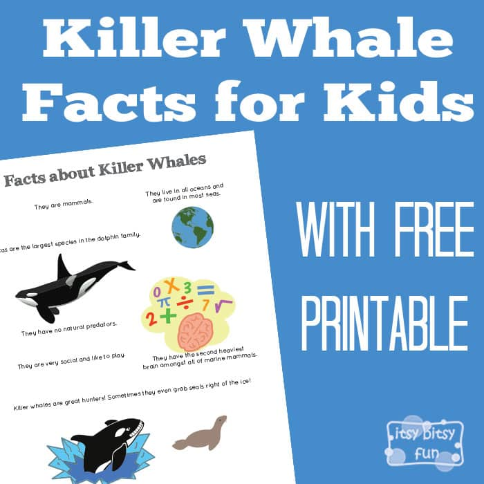 Fun Killer Whale Facts for Kids