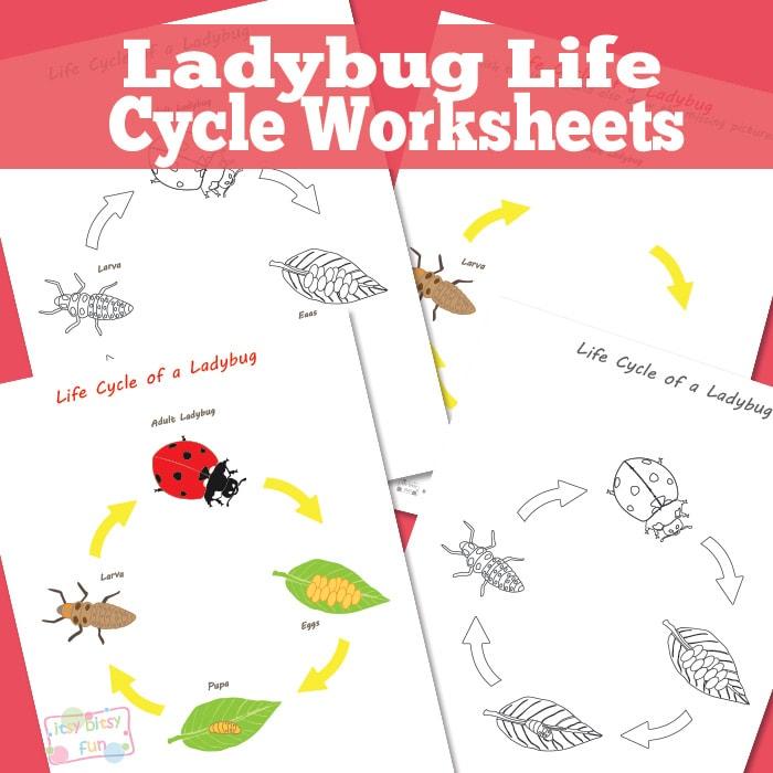 Ladybug Life Cycle Worksheets and Diagrams