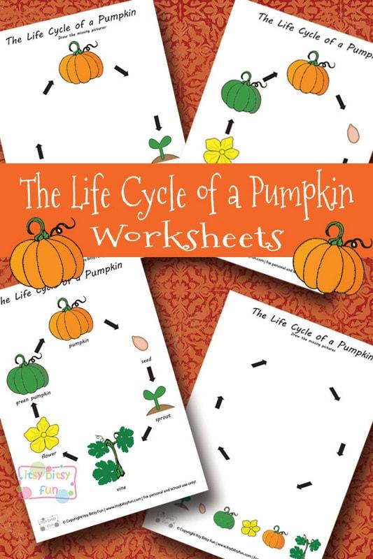 Life Cycle of a Pumpkin Worksheets Printable