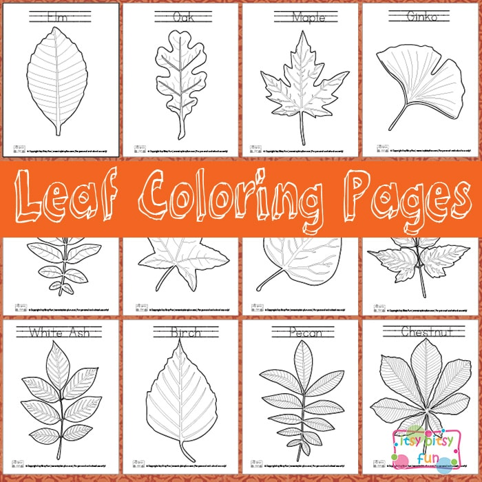 printable leaf coloring pages - Tree Leaves Coloring Page