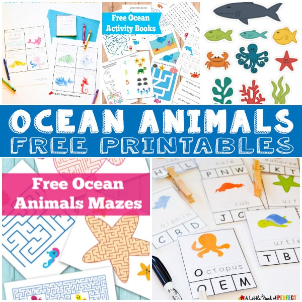 picture about Printable Ocean Animals named 15+ Ocean Animal Printables for Young children - Itsy Bitsy Enjoyment