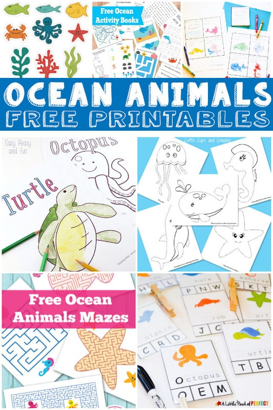 graphic relating to Printable Ocean Animals named 15+ Ocean Animal Printables for Young children - Itsy Bitsy Enjoyment
