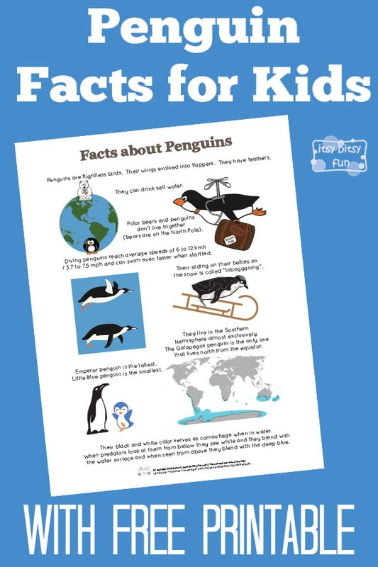 Fun Penguin Facts for Kids