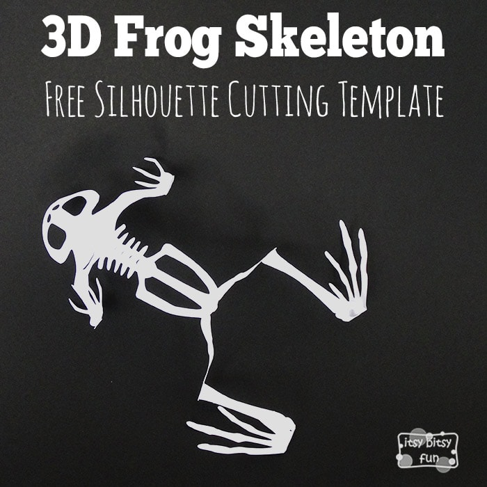 Printable 3D Frog Skeleton Templates