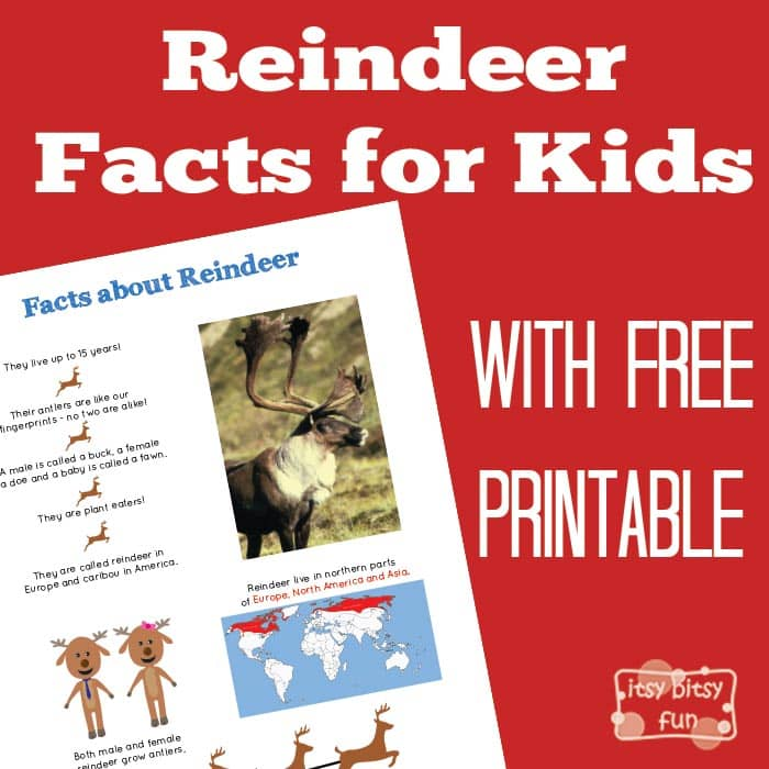 Fun Reindeer Facts for Kids