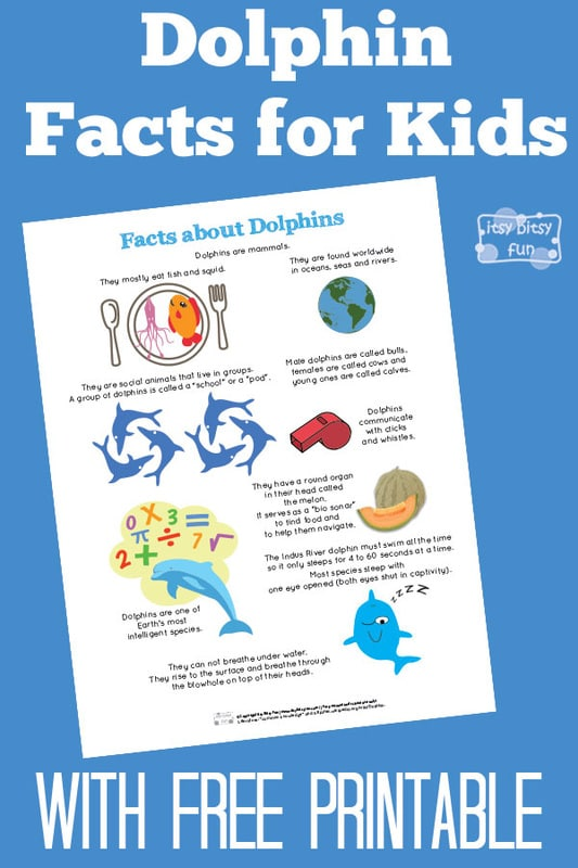 Free Printable Fun Dolphin Facts for Kids