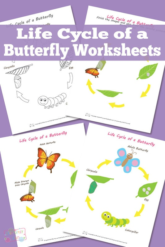 Free Printable Life Cycle of a Butterfly Worksheets
