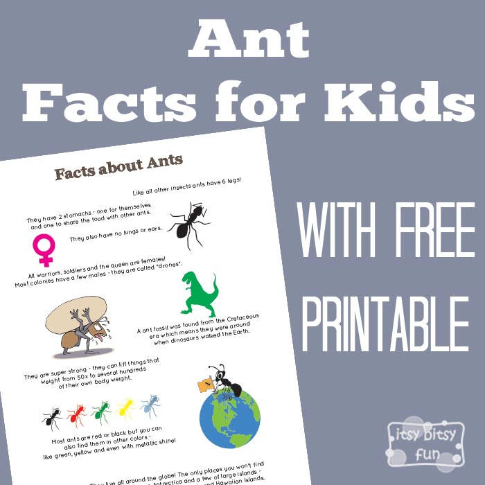 Fun Ant Facts Printable for Kids