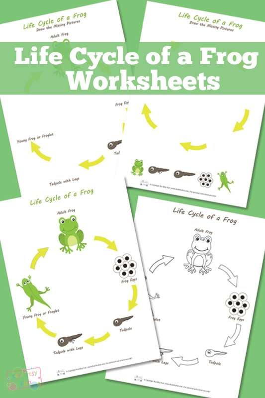 Life Cycle of a Frog Worksheets Printables