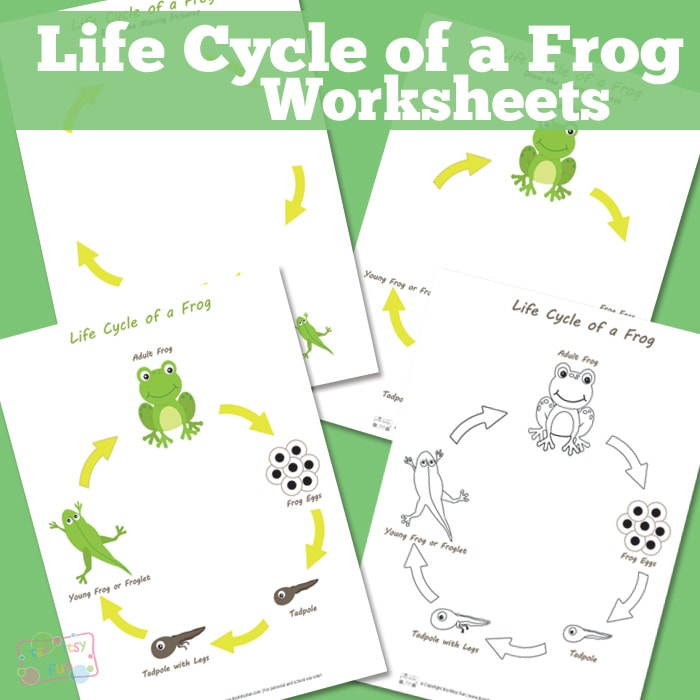 Life Cycle of a Frog Worksheets