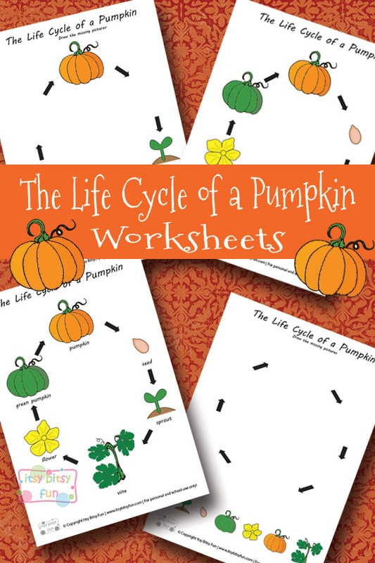 image relating to Pumpkin Life Cycle Printable referred to as Existence Cycle of a Pumpkin Worksheet - Itsy Bitsy Enjoyment
